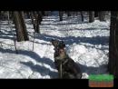 Прогулки в лесу с собакинами уютная старость