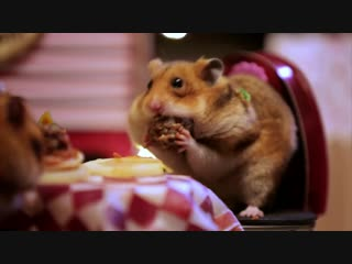 Tiny Hamsters Tiny Date (Ep. 5)