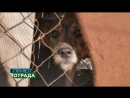 Приют для животных Отрада