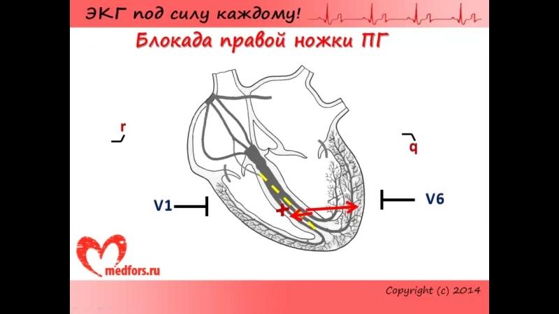 Лекция 7. Пропедевтика внутренних болезней. ЭКГ