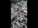 спариваниематки пчел листорезов