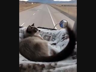 Путешествие с комфортом