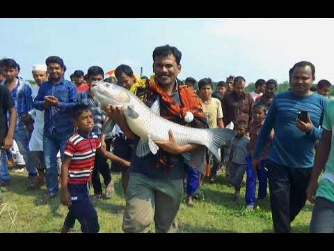 Huge Black Carp Fishing By Topu Fishing Team