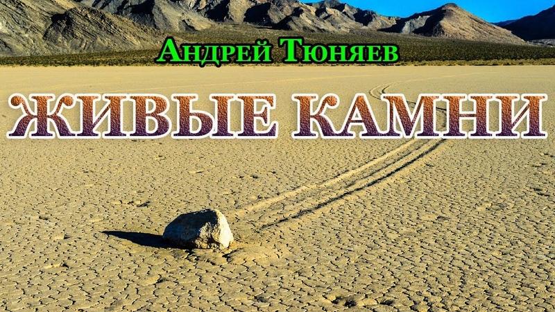 Живые камни. Андрей Тюняев