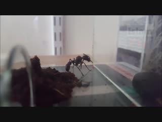 Даже муравей уповает на Господа