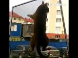Котики терпят неудачу