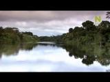 C водой и без воды _ Пакайя-Самирия_Зеркальные джунгли