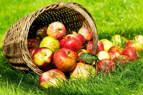 наливные яблочки я тогда молодая была, совсем еще девчонка, жила в деревне с бабушкой. не знаю почему, но жить в ее доме мне нравилось больше, чем в родительском. мама не возражала - бабушка уже