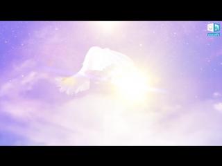 Video_allatra.mp4