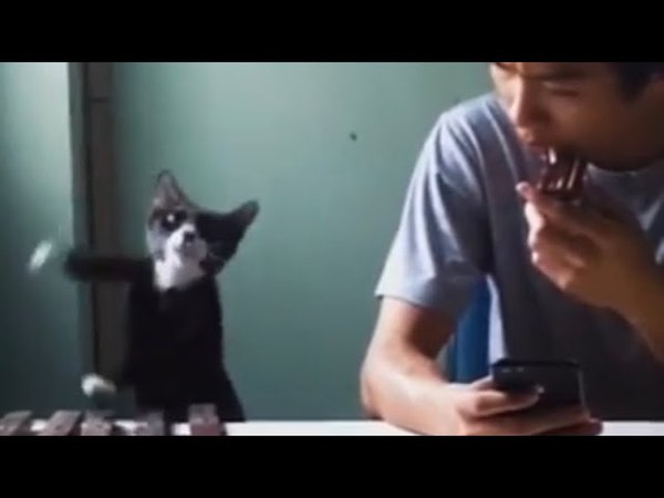Cat Plays Cell Phone Ringtone feat Lê Song Bảo Duy