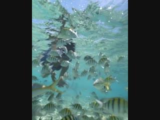 Snorkeling cayo arena go dominican republic