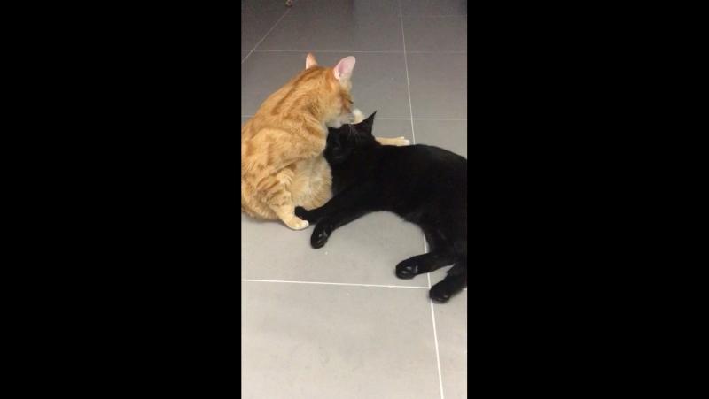 Так принял Рыжик-бывший бездомный кот, найдёныша с улицы😍у моего брата и его жены😘
