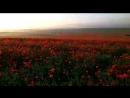 Чудесный рассвет заполняет маковое поле Автор видео Владимир Рябков