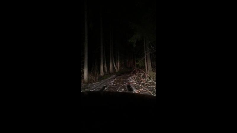 Наконец-то выбрались из этого чудо-леса 😯 такойжестидавнонебыло оченьсильнохочуспать покатушки академияавтомобильноготуризм