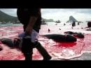 Остановить Гриндадрап на Фарерских Островах, Убийство Дельфинов