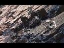 Ученые отказались верить своим глазам Кладбище странных человекообразных существ найдено на Марсе