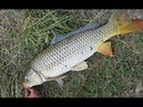 Удачная рыбалка на кастинговую сеть!