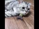 смешные коты 2018 №2