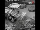 Ловкие панды