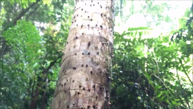 Ходили с моей активной клиенткой на водопад Паенг через джунгли 🐒🐛🦋💦