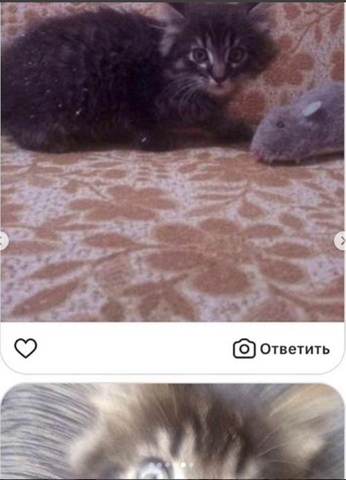 Под Киевом задержаны супруги-живодеры, до смерти пытавшие животных. ЖИВОДЕРКА И РАЗВЕДЕНКА ЯНА МАЙБОРОДА. HAJlBCtGTf0