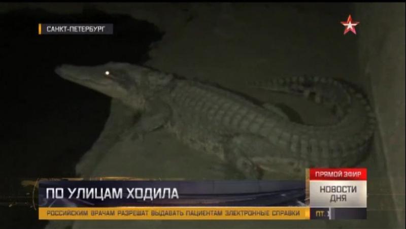 Питерский Крокодил