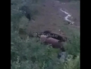 В Норильске медведя с дачи прогнала собака