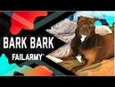 Bark Bark Dog Fails August 2018 FailArmy