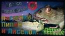 (О) Крысята пасючата. Трехзубый Пипин и шилопопый Лисёнок. Как дела? (Wild Rats)