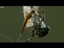 Паук выстреливает паутиной на 25 метров