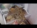 Нападение совы на морозильник