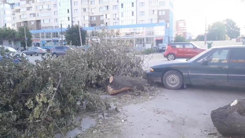 На улице Маяковского упало дерево