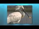 Photos d'oiseaux aquatiques : Comment réaliser un affût flottant