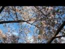 Расслабляющая музыка Сон сон стресс помощи Медитация красиваяприрода успокаивающий★ 68