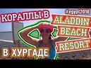 КОРАЛЛЫ в ALADDIN BEACH RESORT в Хургаде | EGYPT 2018