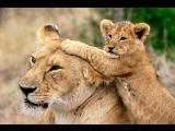 Заботливые мамы - Детство ...
