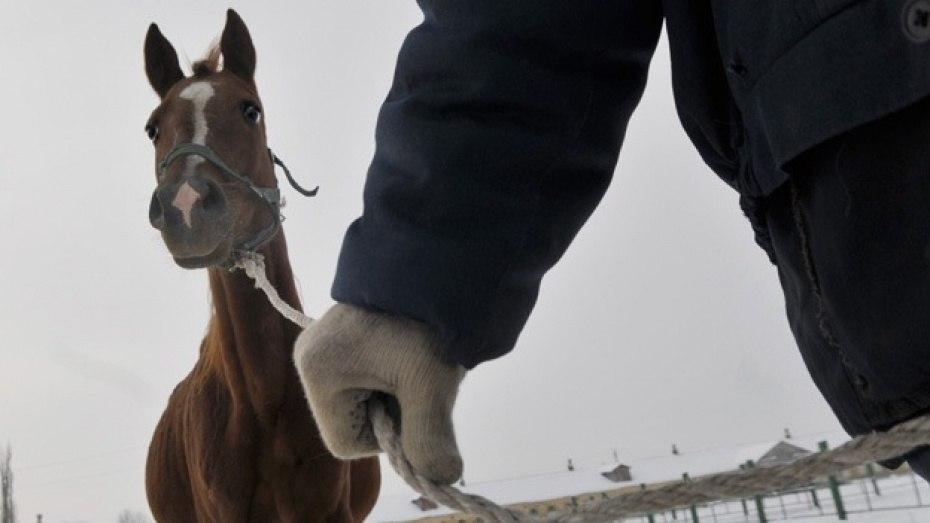 Трое жителей Сторожевой украли лошадь в Марухе