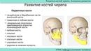 Развитие костей черепа Аномалии развития