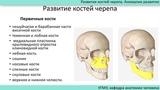 Развитие костей черепа. Аномалии развития