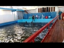 Кара-Даг дельфинарий 1