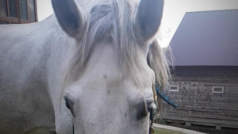 конно-туристическая база Фишт