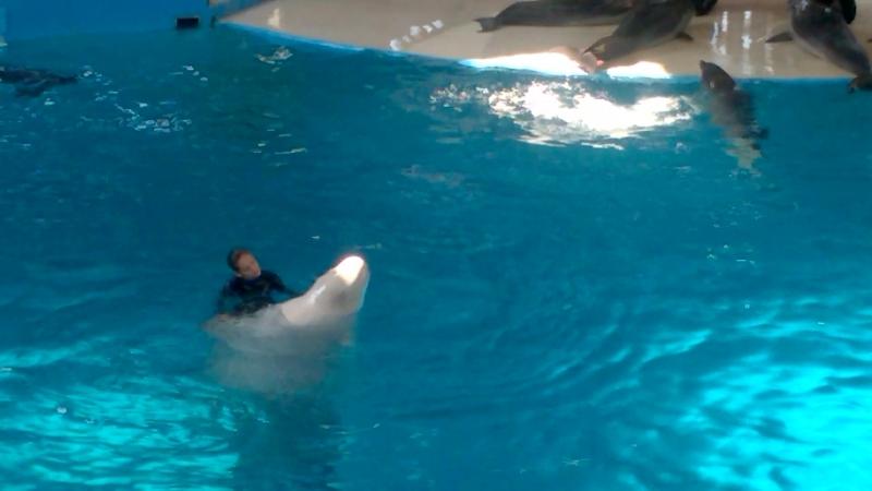 Трогательные отношения человека и дельфина