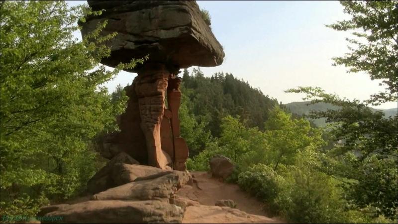 «Дикая природа Германии (08). Пфальцский лес» (Познавательный, животные, 2012)
