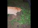 🐅 Тигра и мышка 🐀 Нет. 🐯Тигра и пищащая лягушка 🐸!