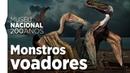 Os maiores monstros voadores no acervo do Museu Nacional
