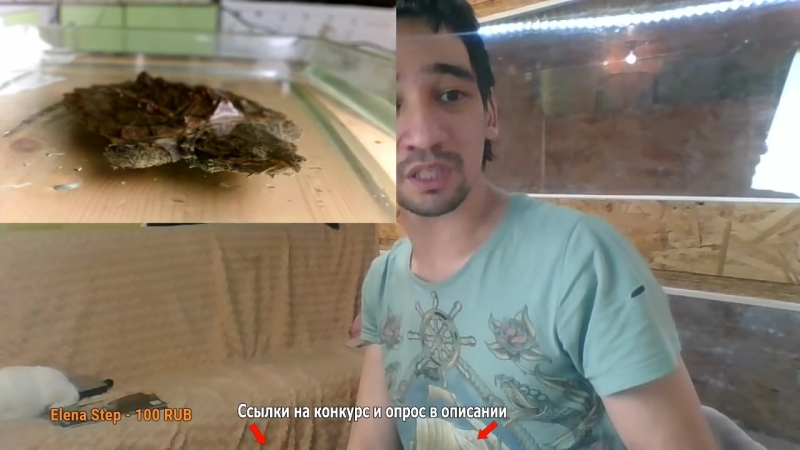 11.04.2017 ГРИФОВАЯ ЧЕРЕПАХА В ЭФИРЕ