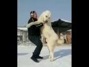 хотели бы такую собаку