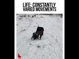 Когда кроссфит реально пригодился тебе в жизни