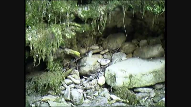 Galitsin SexKeyRU - 004 - Forest Nymphs (Katerina Olesia)