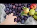 Лучедар В путешествии по божественным фруктовым садам😍👍.